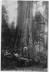 Calaveras Big Trees State Park, California