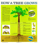 How a Tree Grows by United States Department of Agriculture