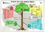 What We Get From Trees by United States Department of Agriculture