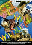 Get Wild with Wildlife: Wild Things Are Happening in Your National Forests