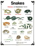 Snakes: Poisonous and Nonpoisonous