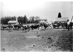 Cattle Raising in Early Days