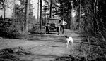 Car, Dog, Person, Forest