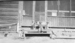 Child, Dog, Porch