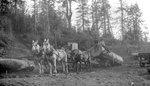 Four Horses, Log