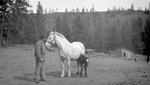 Man, Colt, Horse, Bldg