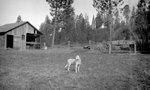Dog, Barn