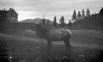 Elk, Bldg