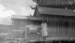 Woman, Cow, Bldg