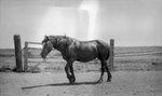 Horse, Fence