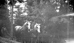 Man, Two Horses