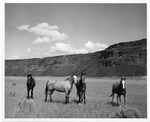 Horses at Grand Coulee Dam