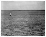 Farming Topsoil