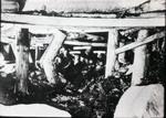 Northwestern Improvement Company (NWI) #9 Mine at Roslyn, Washington